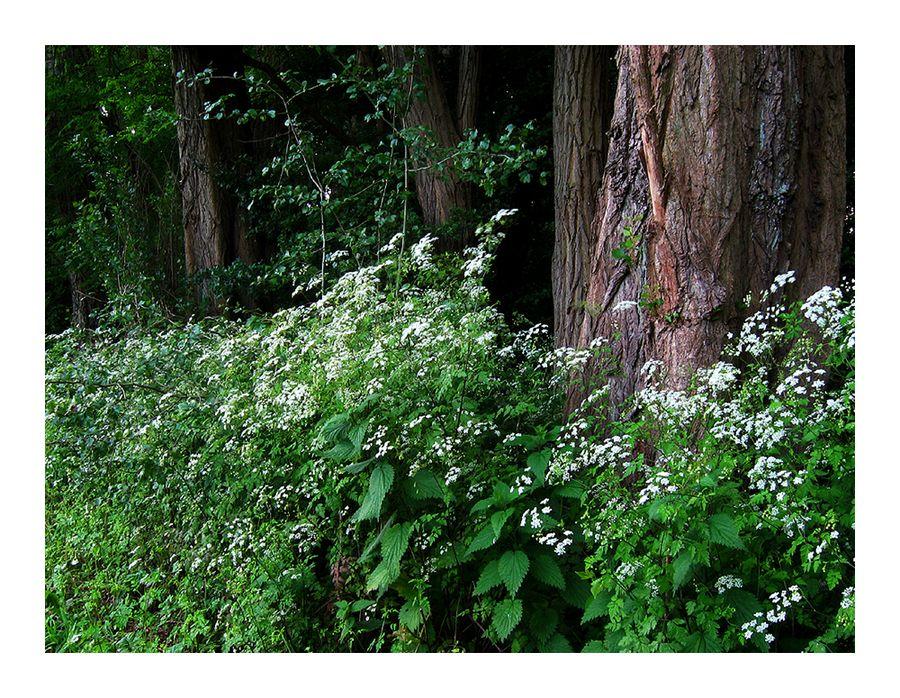 ...Grenzen zum Wald...