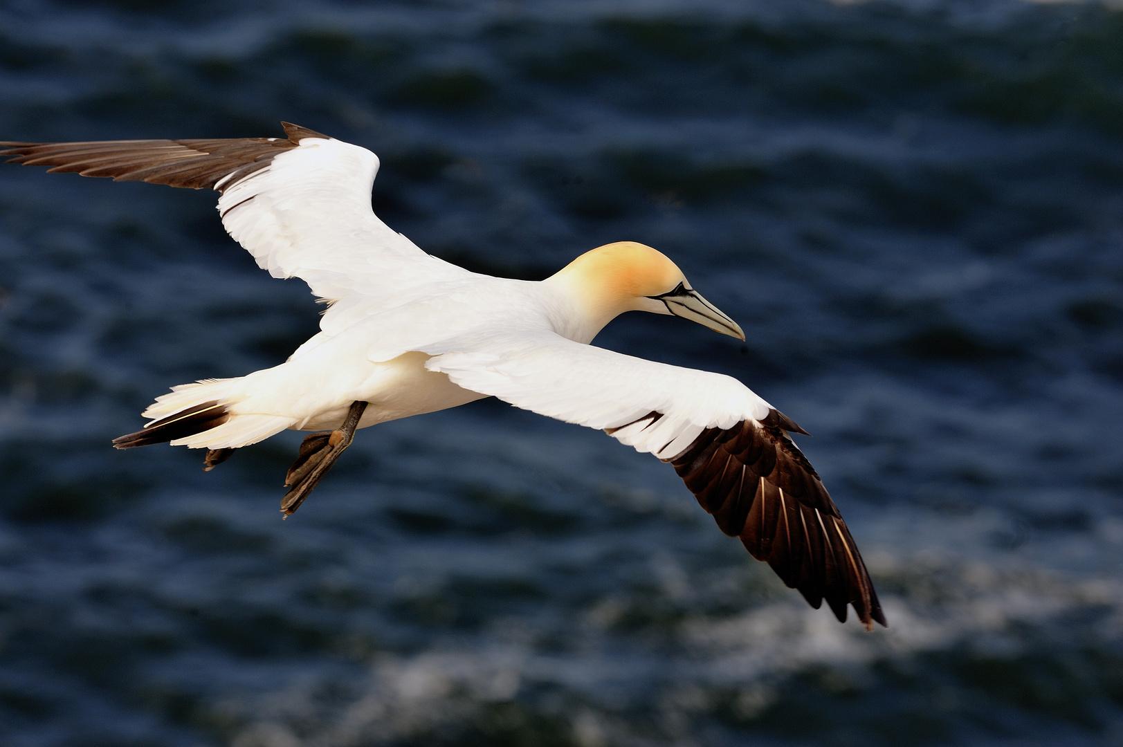 Grenzenlose Freiheit....wundervoller Bastölpel auf Helgoland