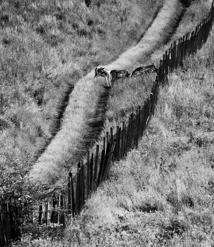 Grenzzaun