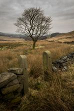 Grey Day on the Moors 1
