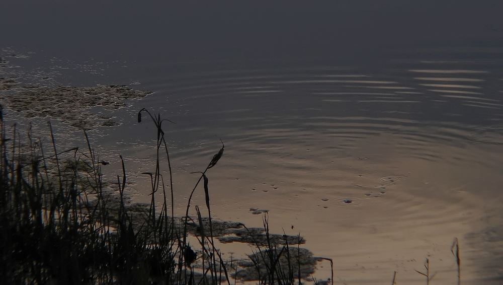 grey reflexions