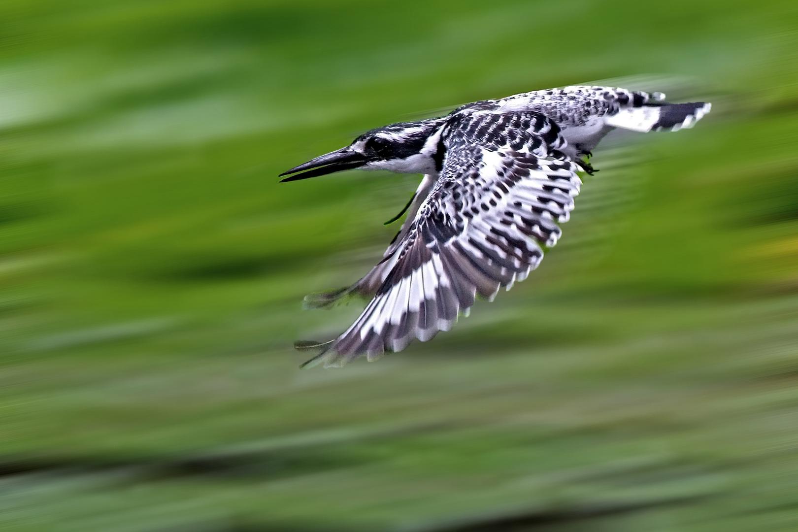 Greyfisher