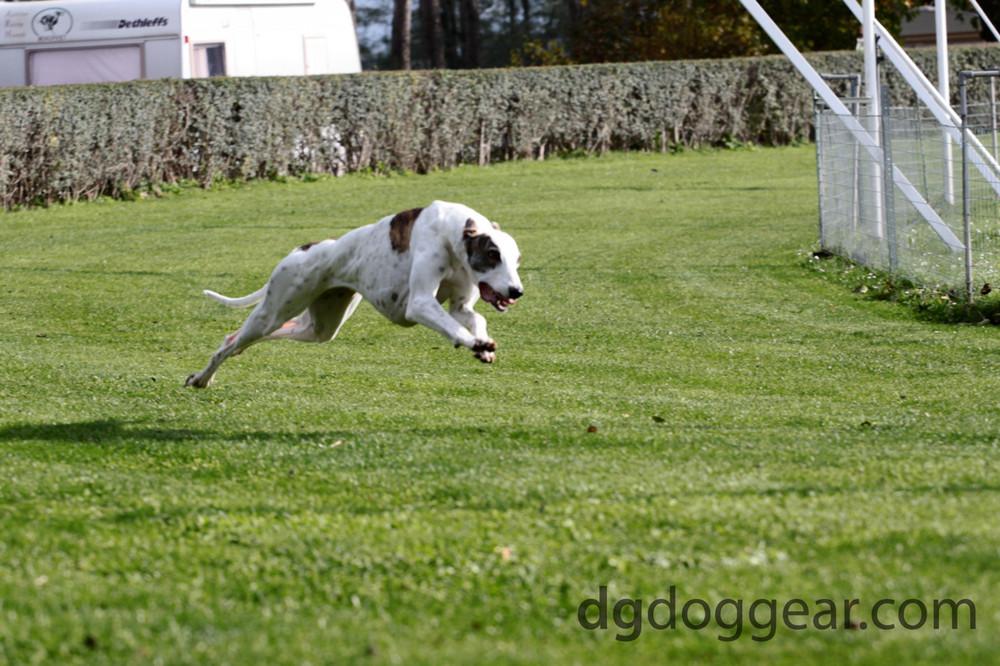 Greyt hound