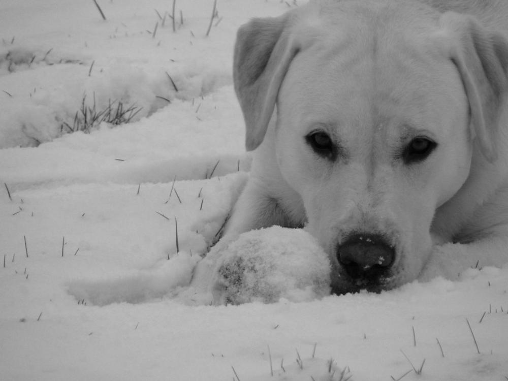 Gribouille dans la neige 2