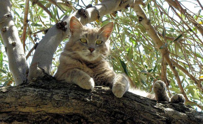 Griechische Baumkatze :-)