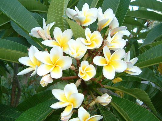 Griechische Blumen