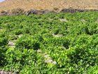 Griechischer Wein ...