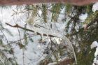 griffe de glace