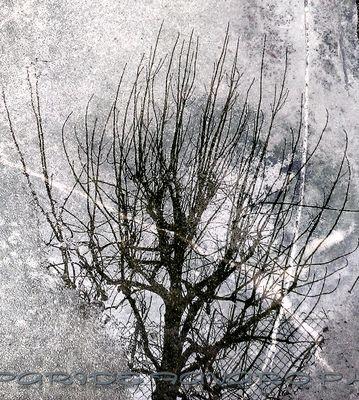 Grigio invernale