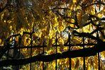 Grille et feuilles d'or