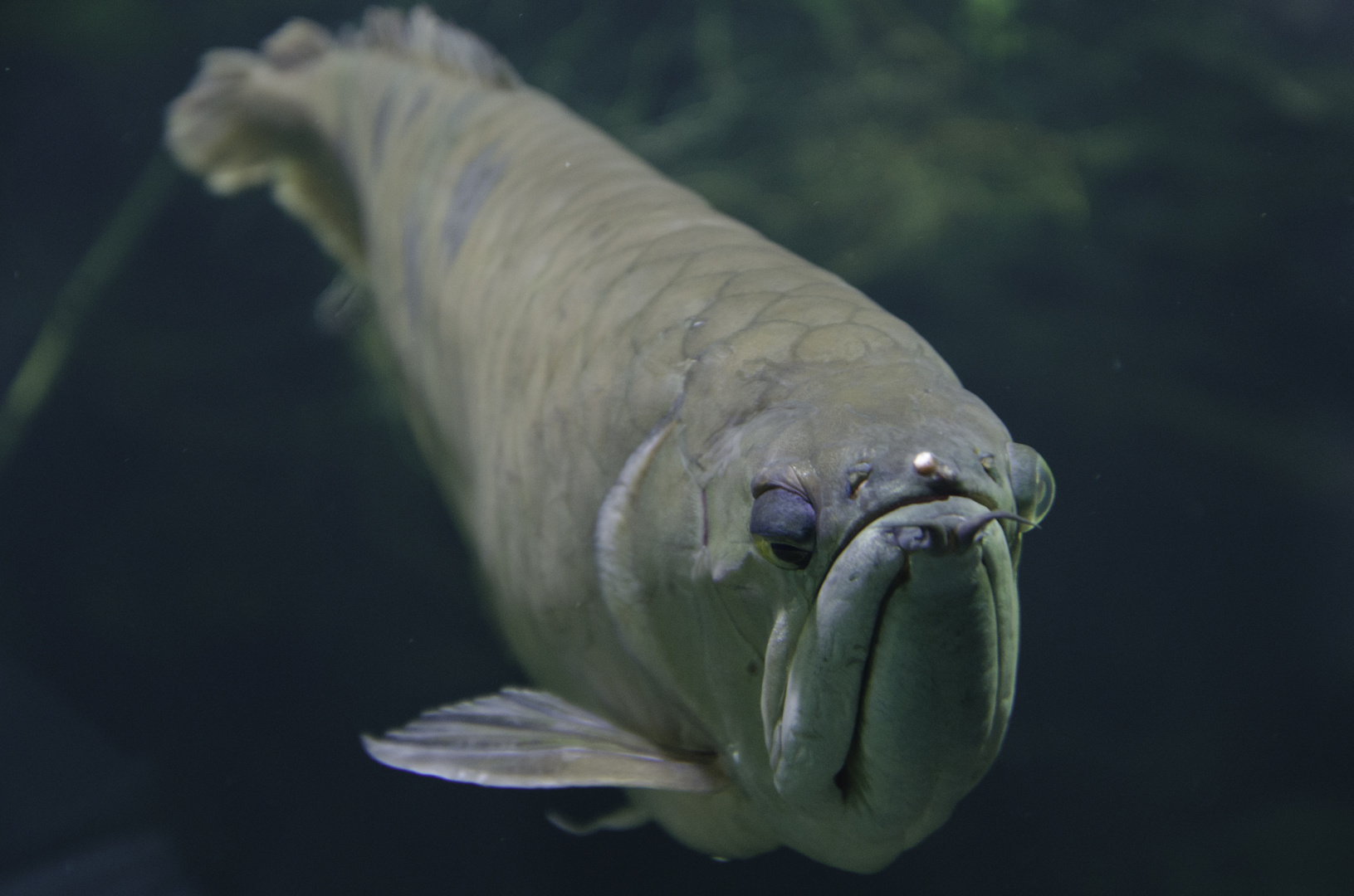 Grimmiger Fisch