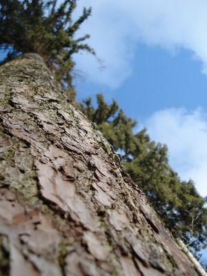 {Grimper jusqu'aux cimes des arbres pour chatouiller le ciel.}