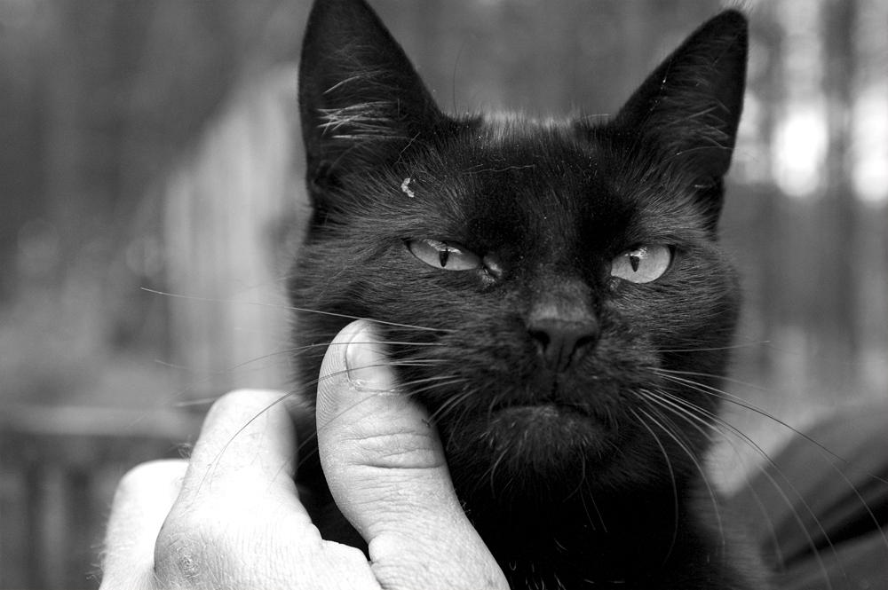 Grinny Cat