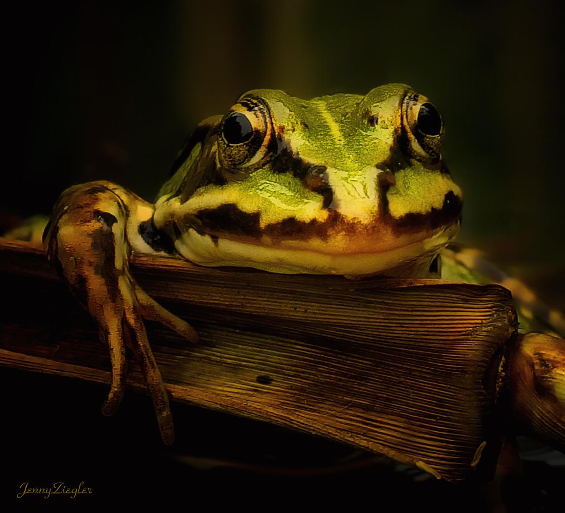Grinse-Frosch