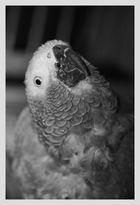 Gris gris du Gabon ....;)