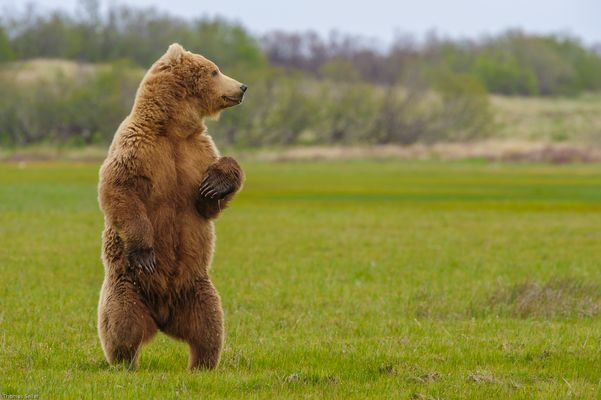 [..grizzly...]