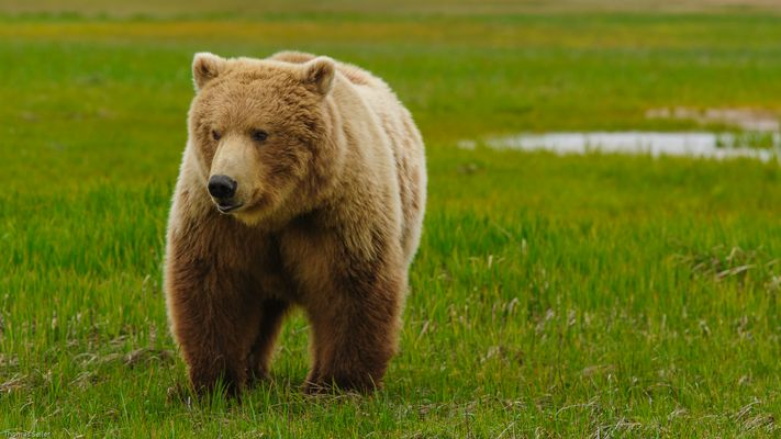 [..grizzly..]