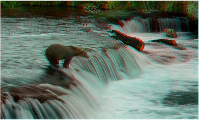 Grizzly´s an den Brooks Falls - 3D Anaglyphe