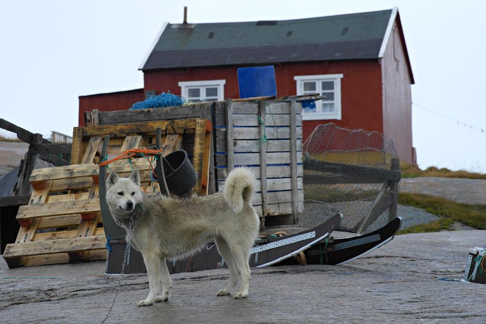 """Grönland """"Warten auf Schnee"""" FVR 2012"""