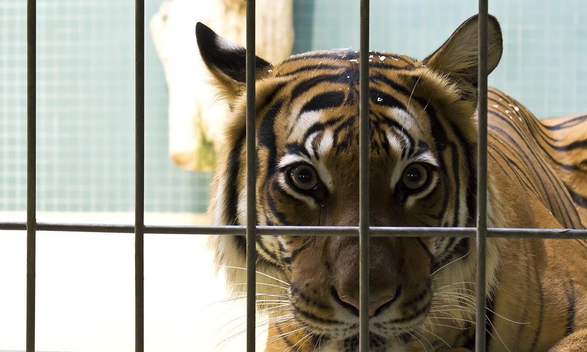 groooosse Miezekatze im Zoo Berlin