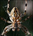 Groooße Spinne!!! Ohaaaa!