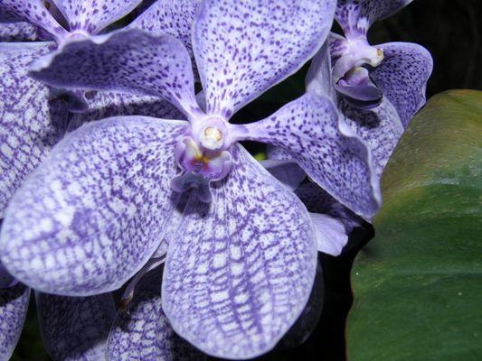 gros plan orchidée