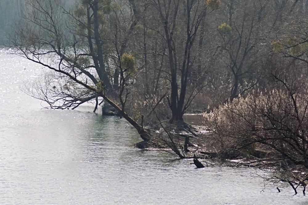 Groschenwasser im Vorfrühling