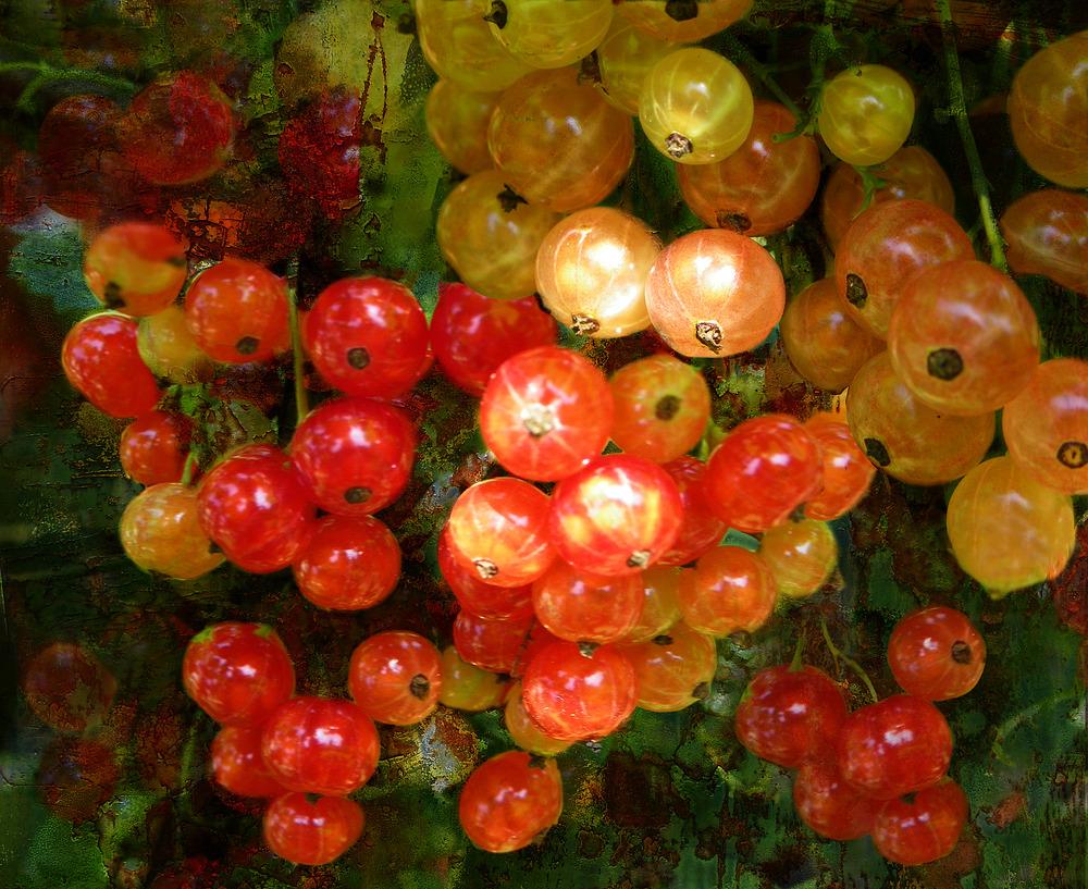 Groseilles rouges et blanches
