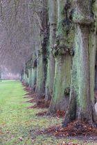 Große Allee im Schlosspark Plön