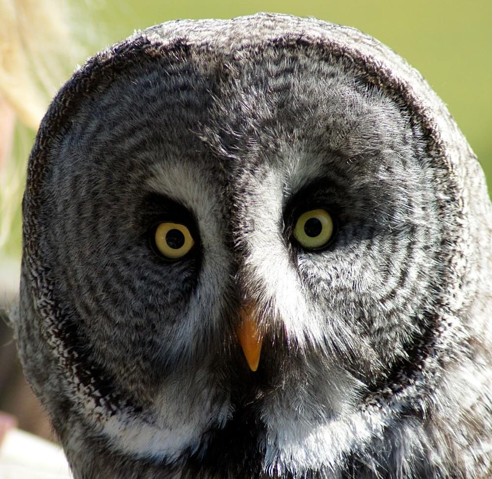 Große Augen
