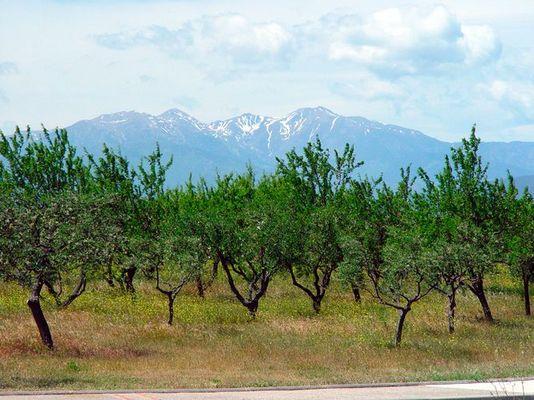 Große Berge kleine Bäume