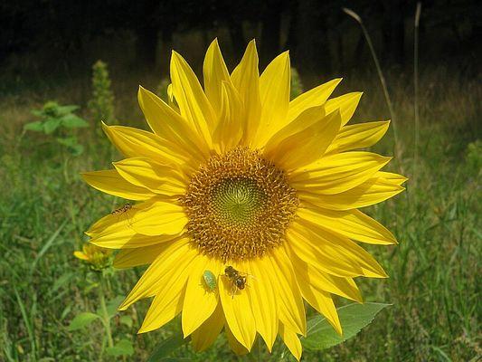 Grosse Blume hat Platz für alle