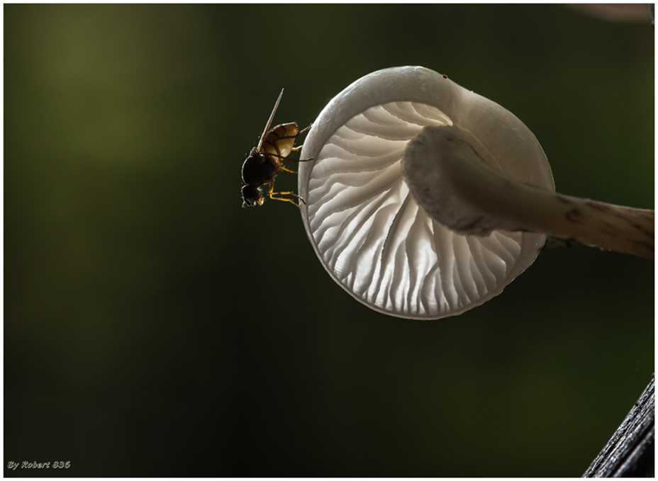Große Fliege...