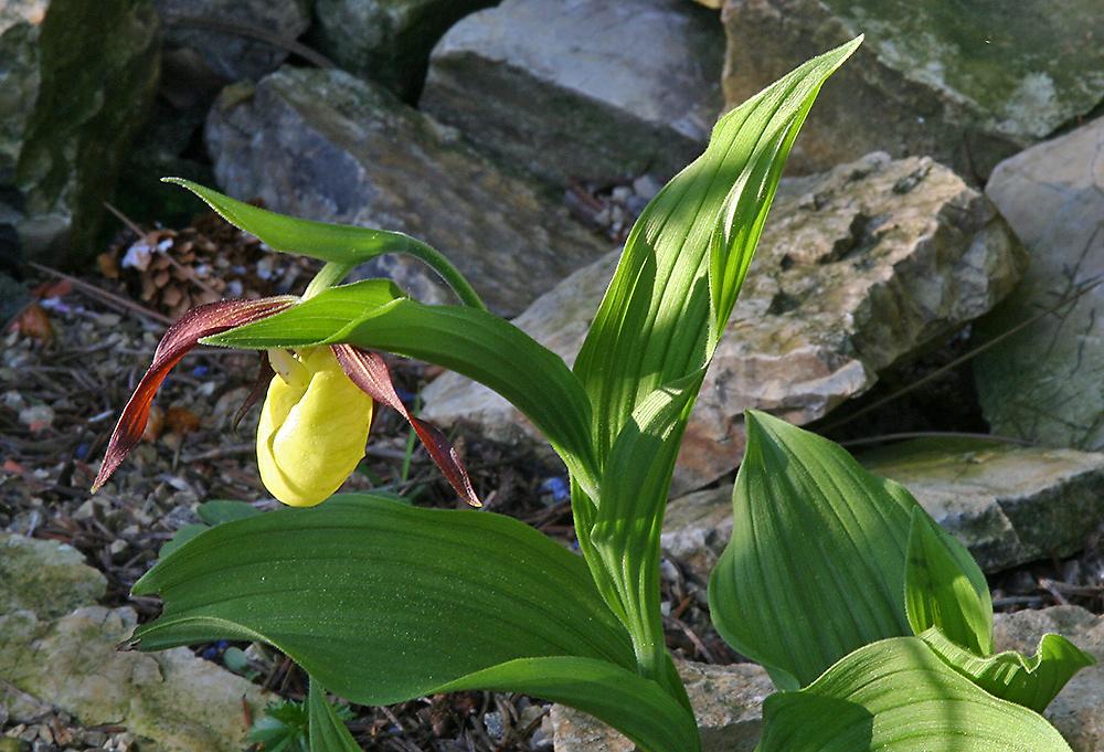 Große Freude überdie erste Blüte zu Pfingsten