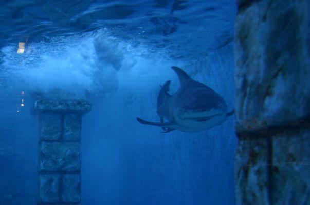 Große Haie, kleine Fische....