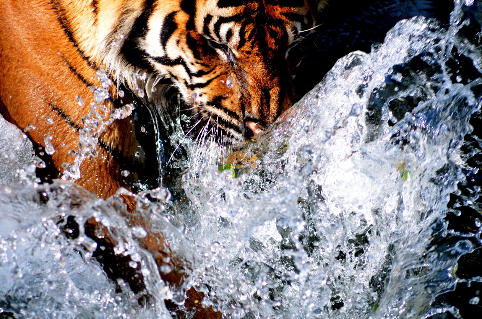 Große Katze im Wasser