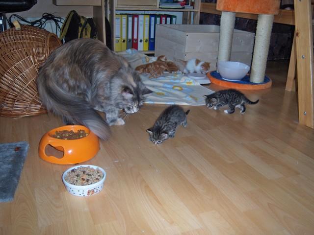 Große Katze kleine Katze