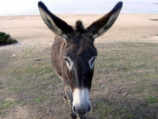 Große Ohren !