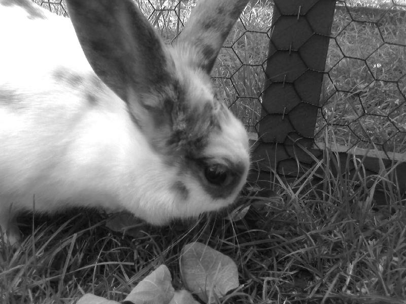 Große Ohren!