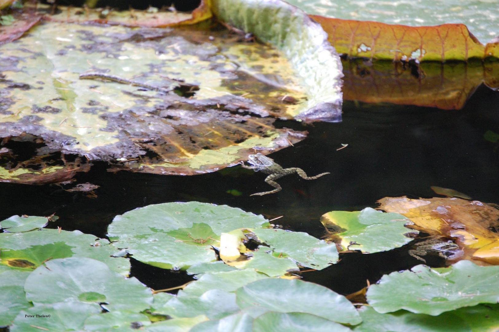 Große Pflanze, kleiner Frosch