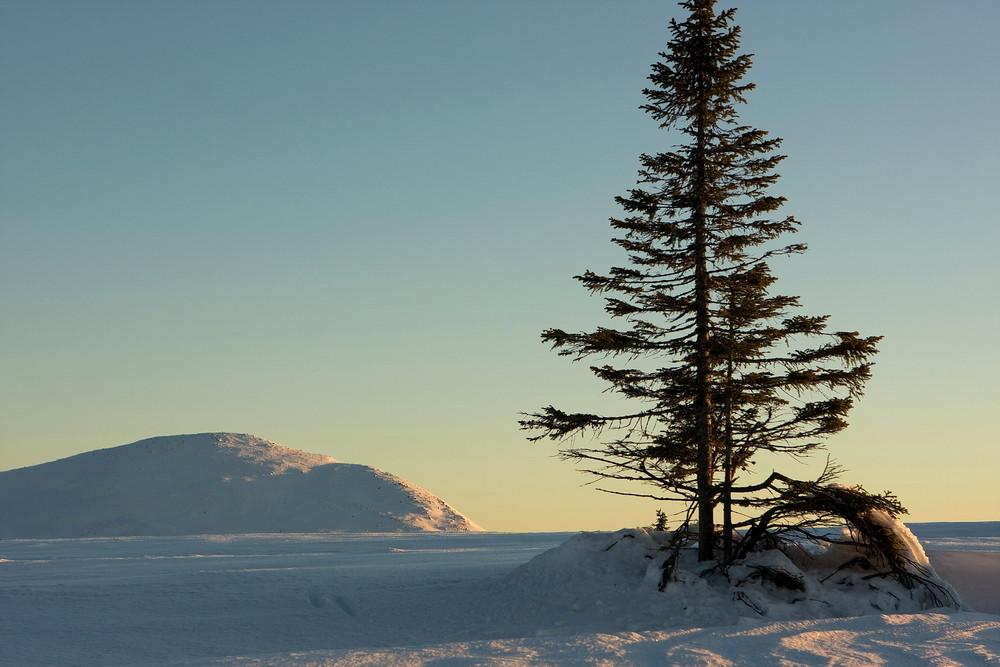 Große Tanne im Schnee