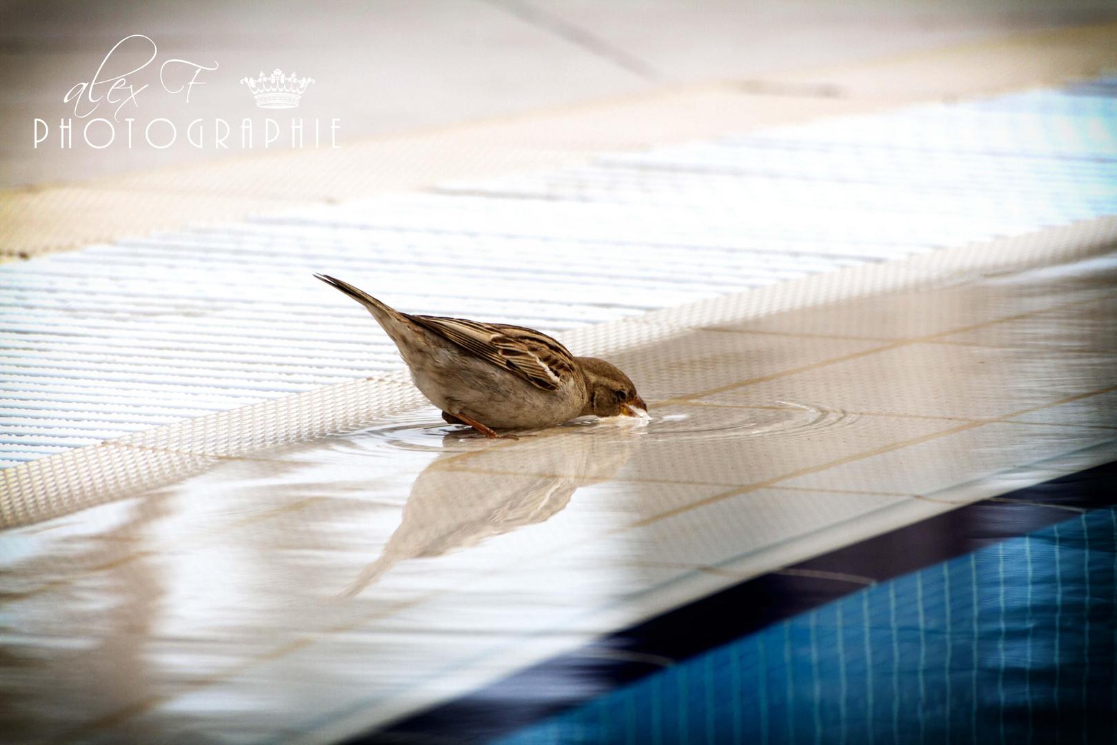 Große Vogeltränke