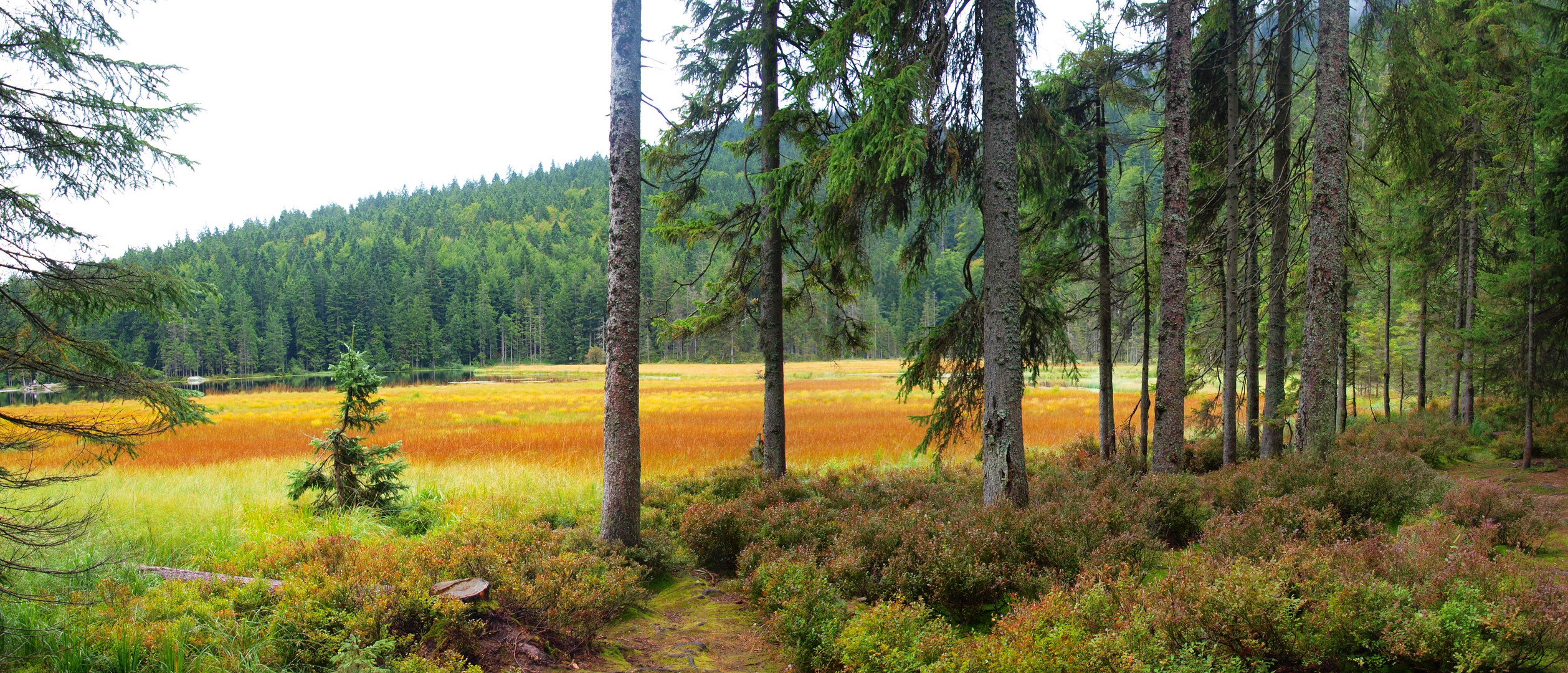 Großer Arbersee im Herbst - Panorama