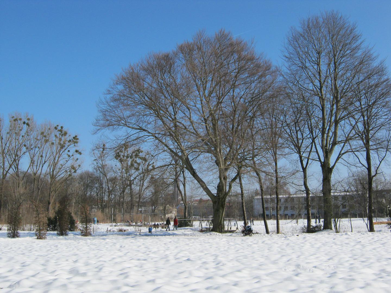 großer Baum 2