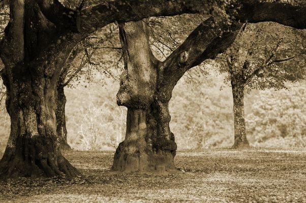Grosser Baum stamm