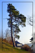 Großer Bonsai oder Baum im Wind