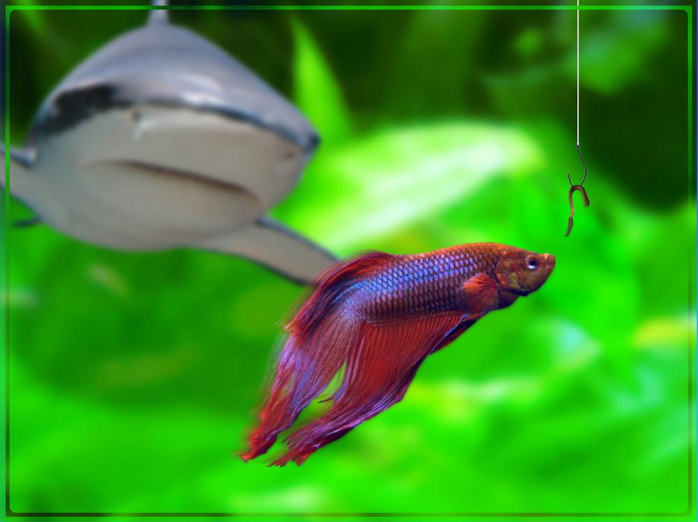 Großer Fisch frißt kleiner Fisch frißt Wurm