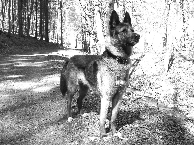 Großer lieber Wolf