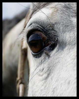 Großer Pferdeblick