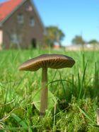 großer Pilz, kleines Haus